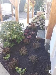 plantation côté maison